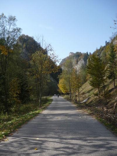 Lesnica Slovakia Nature Road Enjoying Life Pieniny Trees Road Nature_perfection Naturelovers Homeland Distance Followtheroad