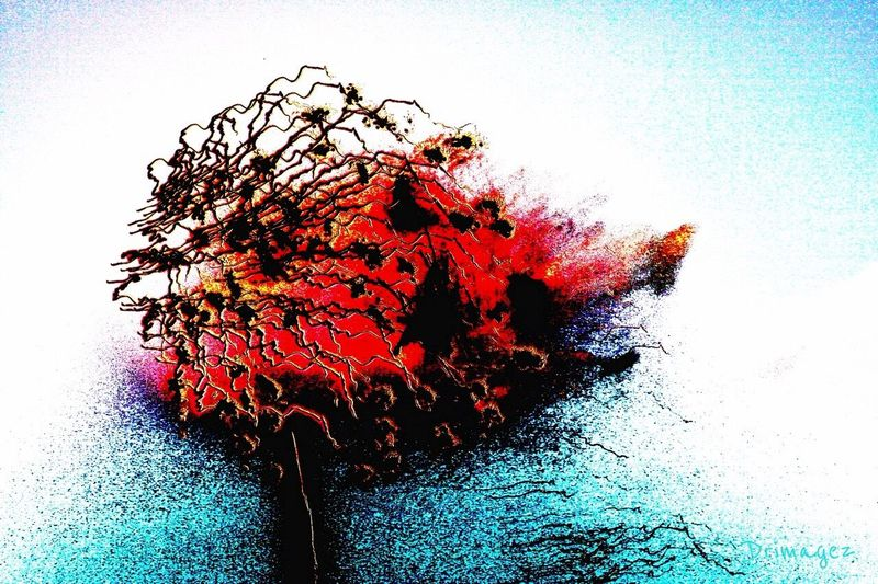 'FIRE TREE' Abstract Impressionism Drimagez Digital Media EyeEm Fireworks Abstractions In Colors
