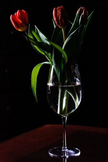 Still life with tulips. Flowers Still Life StillLifePhotography Flower Collection Showcase: March