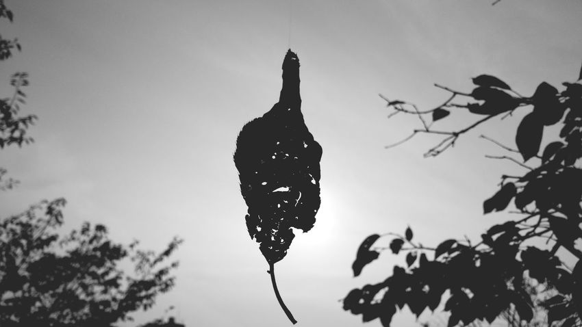 Silhouette Tree Nature Beauty In Nature Light And Shadow Hagging A Tree In Front Of Getting Inspired EyeEm Gallery From My Point Of View EyeEm Nature Lover Tree Street Photography Landscape Black & White Monochrome Fall