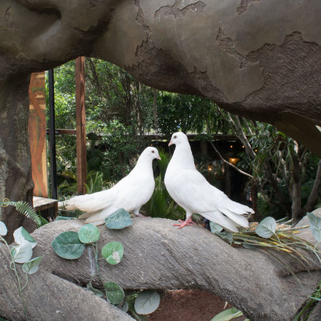 love is in the air King Love Paloma Pareja Amour Amô Animal Themes Animal Wildlife Animals In The Wild Bird Birds Close-up Day Naturaleza Nature Nature Lover No People Outdoors Park Perching Tenderness Tenderness And Warmth... Tendernesslove Two People White Color