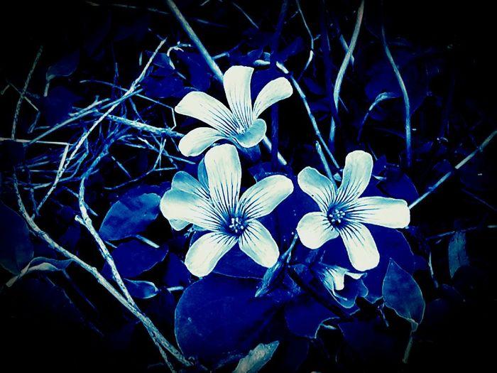 Flowers Double Edit