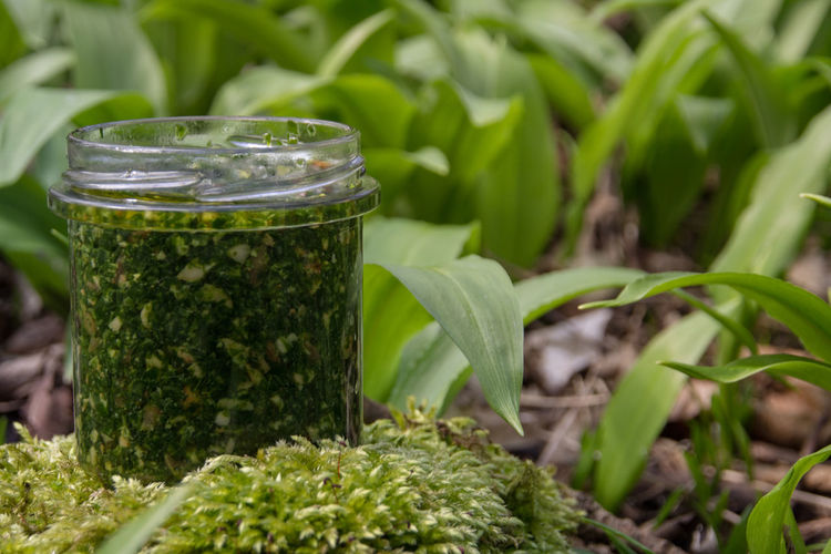 Bärlauch  Bärlauchwald Garlic Pesto Beauty In Nature Bärlauch Sammeln Bärlauchpesto Bärlauchzeit Close-up Day Food Food And Drink Freshness Glass Green Color Growth Herb Leaf Nature No People Outdoors Plant Plant Part Vegan Wildgarlic