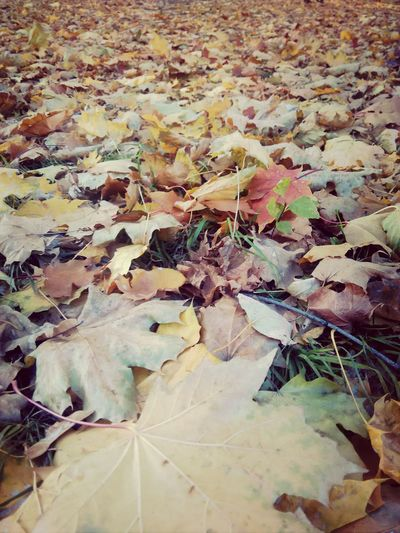 листья осень Золотая осень митро