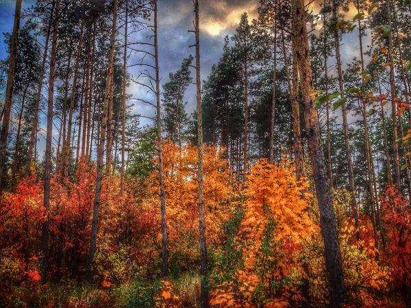 Autumn Forest Zadonsk Homeland Задонск. Лес у электроподстанции, выезд на Липецк