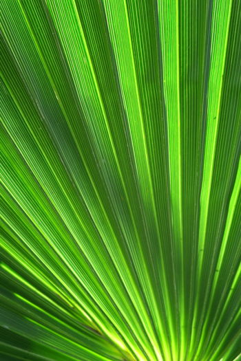 Backgrounds Biology Close-up Complexity Day Environment Evolution  Fern Freshness Frond Green Color Growth Leaf Nature No People Outdoors Palm Leaf Palm Tree Plant Satisfaction Sunlight Textured  Tree Vibrant Color Perspectives On Nature The Minimalist - 2019 EyeEm Awards