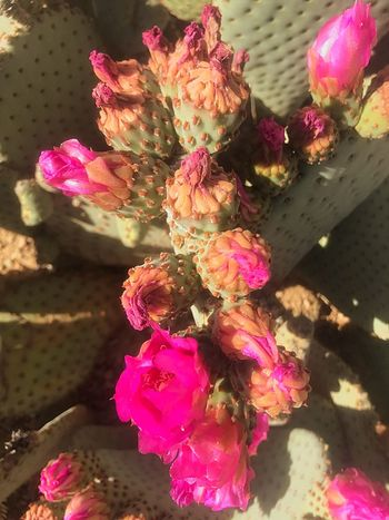 Desert in full bloom. Fragility Beauty In Nature Nature Petal Pink Color Plant Flower Head Sunlight Blooming Growth No People Outdoors Water Close-up Day