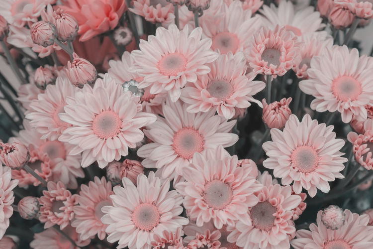 Flower Flowering Plant Plant Freshness Vulnerability  Beauty In Nature Fragility Petal Close-up Flower Head Inflorescence Growth Pink Color High Angle View No People Nature Day Outdoors Abundance Full Frame Pollen Bunch Of Flowers