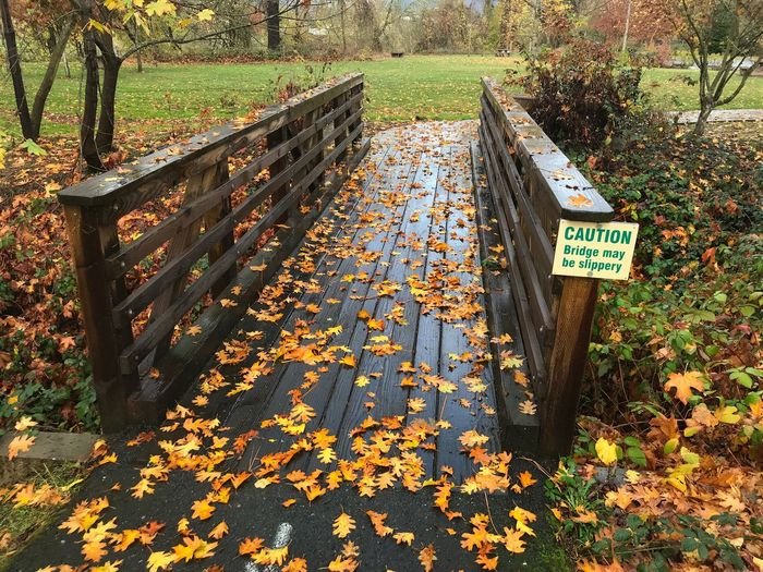 Slippery when wet. Autumn Leaf Change Day Outdoors Text Nature Beauty In Nature Communication No People Tree Tranquility Scenics Grass Slippery Slippery When Wet Bridge