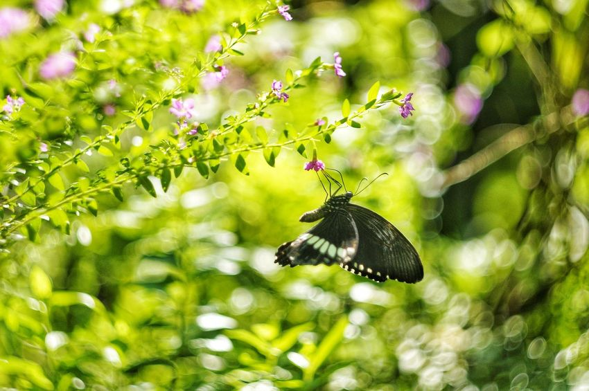 Bokeh EyeEm EyeEm Best Shots EyeEm Nature Lover EyeEmNewHere EyeEm Gallery Eyeem Market Pattern, Texture, Shape And Form EyeEm Selects Diversity Eyeemphotography EyeEmBestPics EyeEm Best Shots - Nature The Week on EyeEm Beesofeyeem Natural Natural Habitat The Week Of Eyeem Insect Animals In The Wild Butterfly - Insect Animal Themes One Animal Animal Wildlife Nature Fragility Beauty In Nature Outdoors No People Growth Flower Green Color Day Plant Pollination Close-up Freshness Full Length