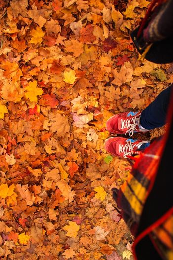 Algonquinprovincialpark Canada Toronto Autumn Leaf Leaves Yellow Nature Outdoors Mountain Forest Beauty In Nature Non-urban Scene Tranquil Scene Multi Colored Human Foot Shoe Standing Footwear
