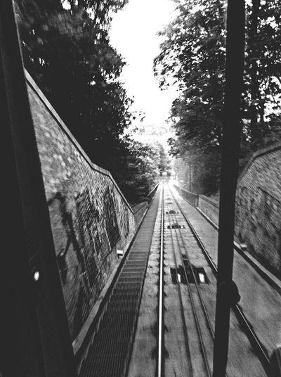 Transportation Tree The Way Forward Railroad Track Rail Transportation Day Sky Outdoors No People Blackandwhite Black & White Monochrome Trainway EyeEm EyeEmNewHere Welcome To Black
