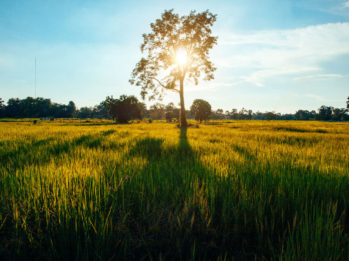 Relax Time With Ricefield Nature Agriculture Beauty In Nature Field Grass Growth Land Landscape Nature No People Outdoors Plant Rural Scene Tranquil Scene Tranquility