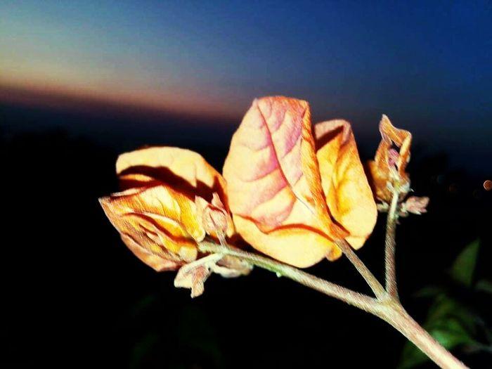 Pastel Power Dslrphotography Mygarden:)