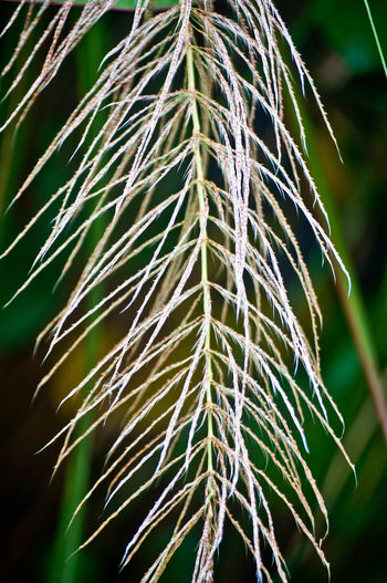 Beauty In Nature Close-up Day Focus On Foreground Freshness Green Color Growth Nature Needle Needle - Plant Part No People Outdoors Plant