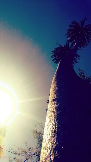 Good Morning Philippines 😊 Palm Tree Outdoors No People Low Angle View Sky Day