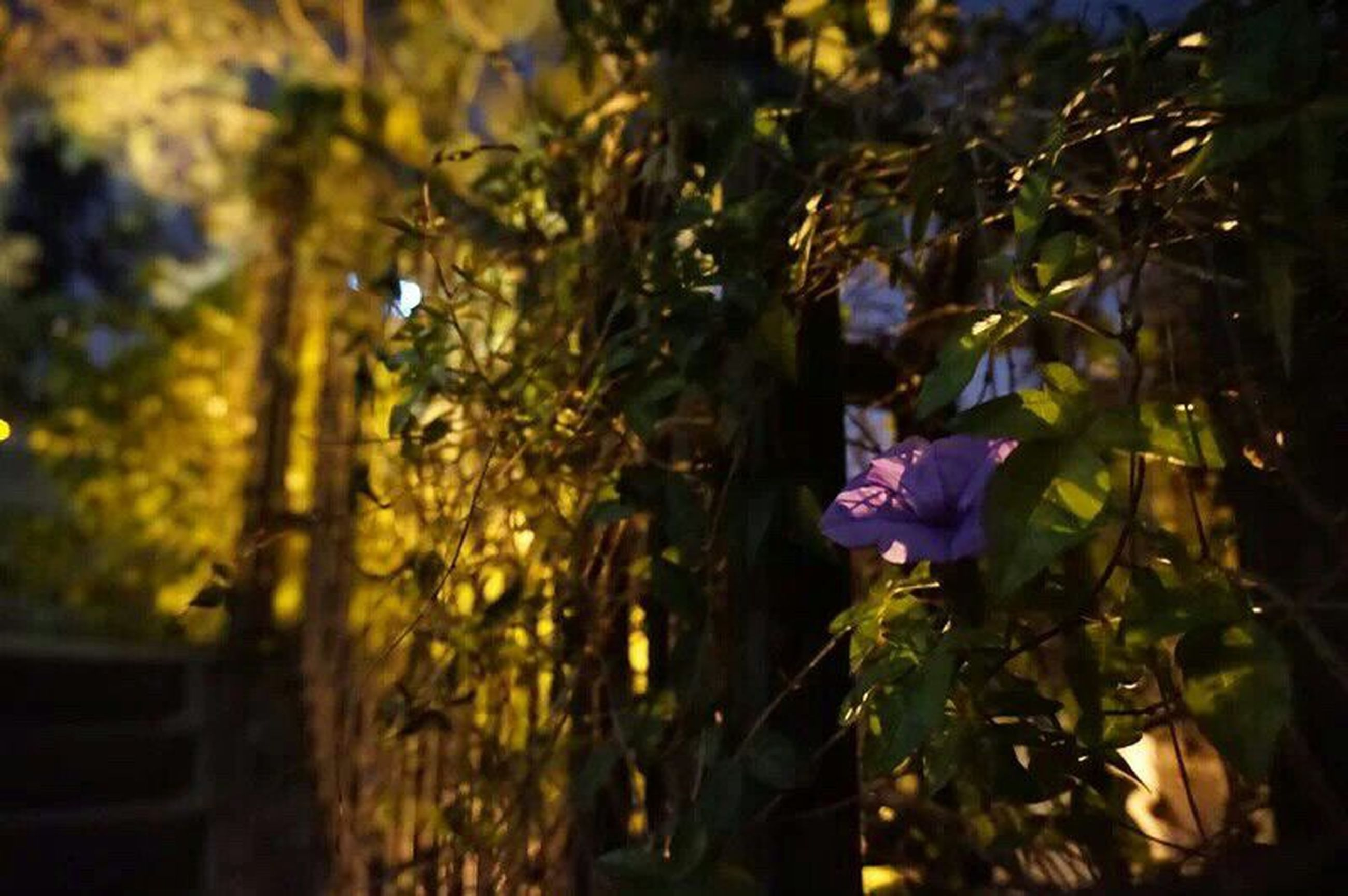 flower, growth, focus on foreground, nature, freshness, plant, beauty in nature, petal, fragility, leaf, tree, close-up, outdoors, day, selective focus, sunlight, park - man made space, blooming, purple, yellow
