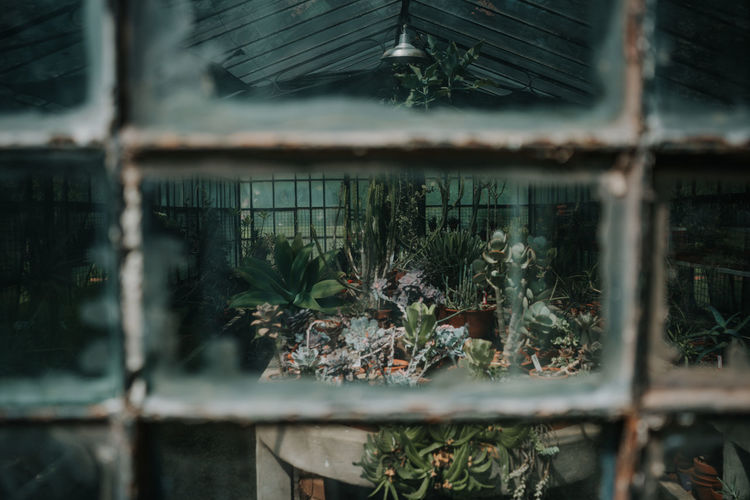 Close-up of plants growing in greenhouse