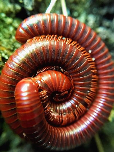 Animal Shell Spiral Close-up One Animal Animal Themes Nature No People Day Sea Life Millipede