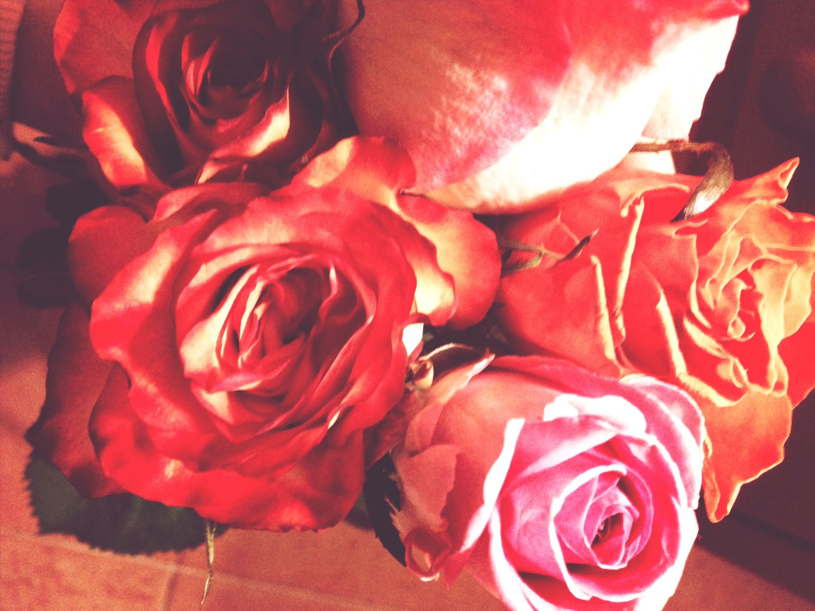 flower, rose - flower, petal, freshness, red, flower head, fragility, rose, indoors, close-up, beauty in nature, pink color, nature, bouquet, high angle view, blooming, single flower, no people, single rose, day