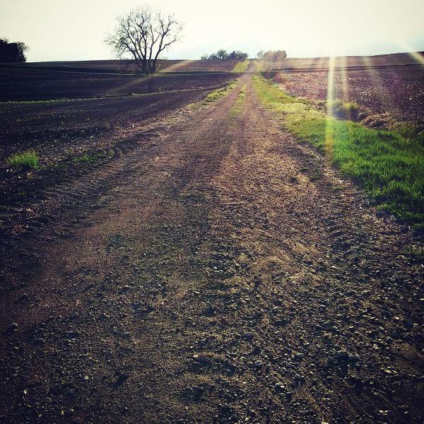 Dirt Road Pebbles Sunshine Ray Of Sunshine Serenity Fields Cornfields Springtime Green Grass Rumble Bars Tractor Tracks Minimum Maintenance