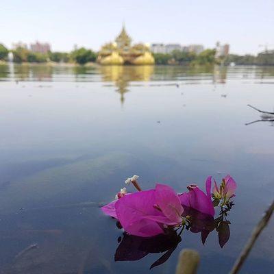 Kandawgyi Lake (no edit - no filters - original s7 photo) Igersmyanmar Myanmar Burma Lake Yourworldgallery Yangon Rangoon Instagood Instagram Asiaonetravelsnaps Alphahype Vacationinstyle Travelgood Mobilephotography Noedit No Edit Nofilter OriginalPhoto Mobilephoto Samsung AOV Artofvisuals