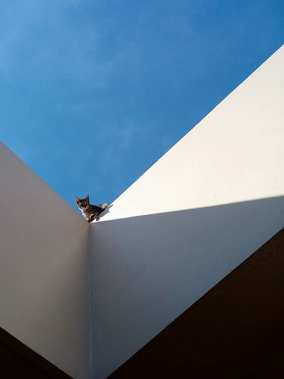 Low angle view of cat on building against blue sky