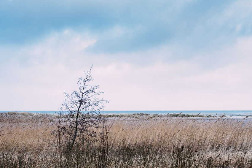 Beauty In Nature Day Field Grass Growth Horizon Over Water Landscape Marram Grass Nature No People Outdoors Sand Dune Scenics Sea Sky Tranquil Scene Tranquility Travel Destinations