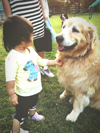 Hello ❤ Doggy Goldenretriever Golden Retriever Dog Dog❤ Dog And Baby Dogs Of EyeEm