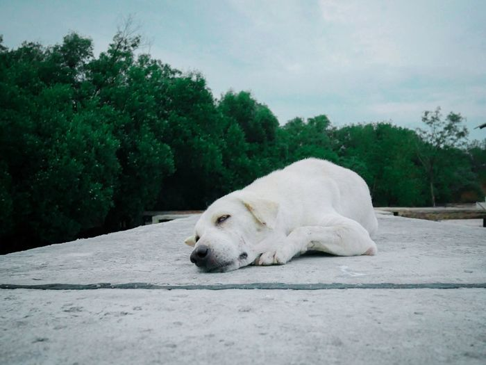 Close-up of a dog resting on footpath
