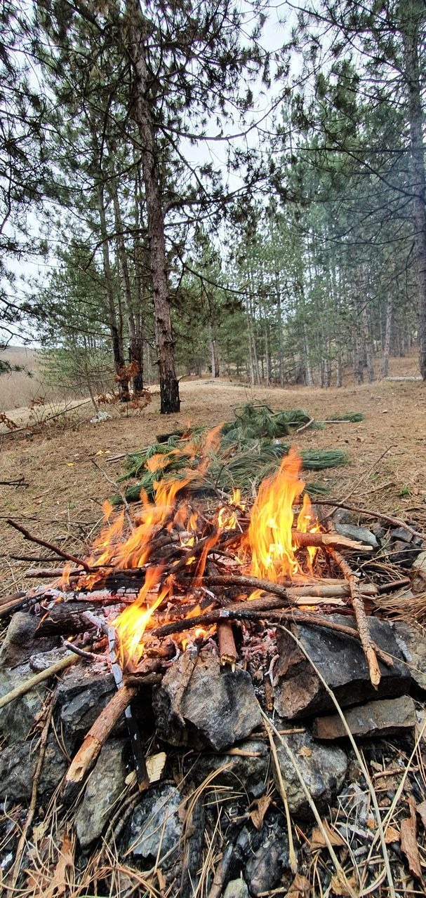 VIEW OF BONFIRE IN FOREST