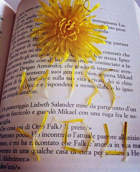 Books Flowers Dente_di_leone Yellow