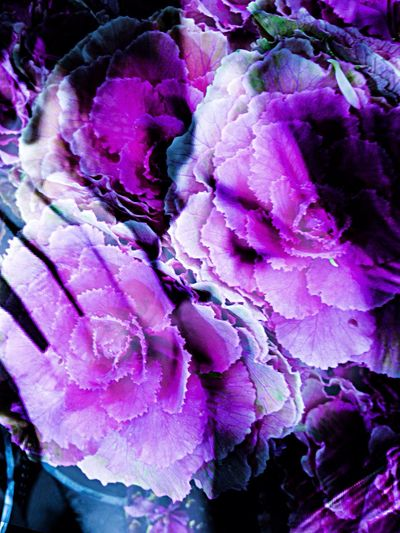 Love is a bouquet of flowers ... It fades with time ... Désespoir