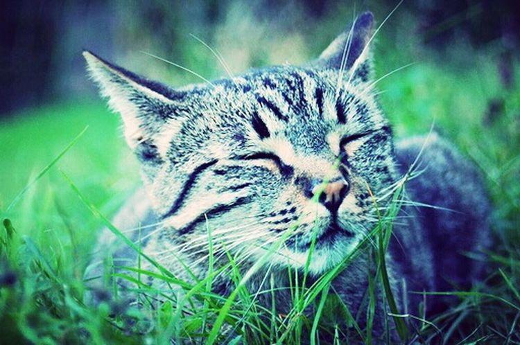 Katzen Cat Gary Animal