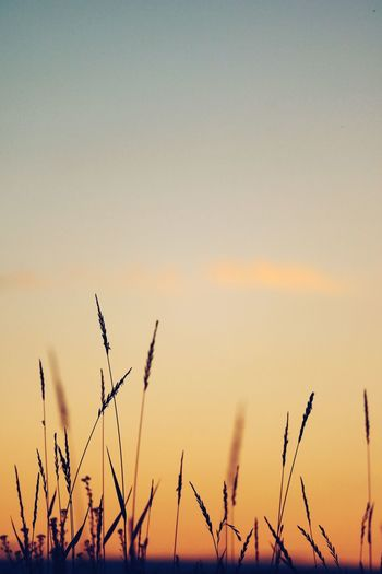 EyeEm Selects Sunset Sky Plant Beauty In Nature Growth No People Nature Tranquility Scenics - Nature Orange Color Tranquil Scene Close-up Copy Space Outdoors Silhouette Clear Sky Plant Stem Idyllic Vulnerability  Day