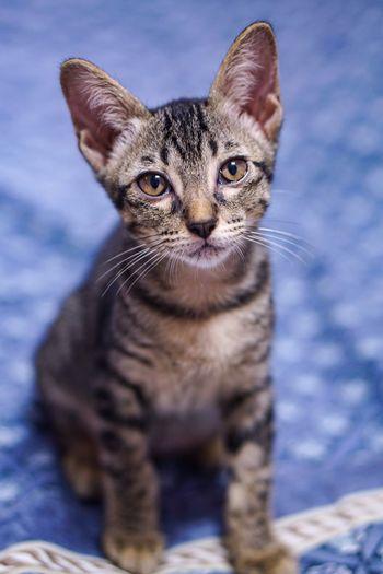Portrait of kitten sitting on bed