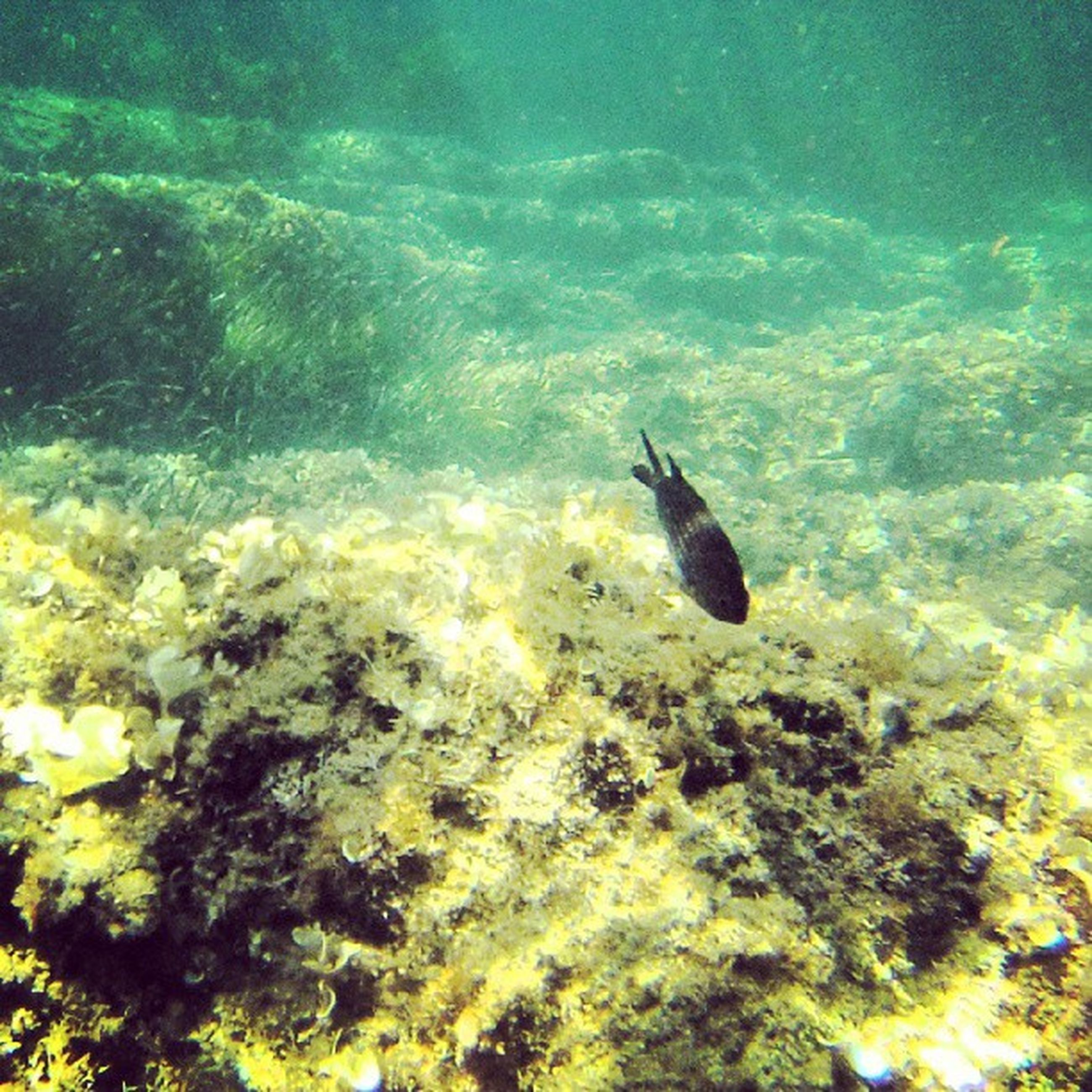 animal themes, animals in the wild, wildlife, water, one animal, swimming, bird, fish, nature, high angle view, underwater, sea, beauty in nature, zoology, two animals, no people, outdoors, sea life, full length, day