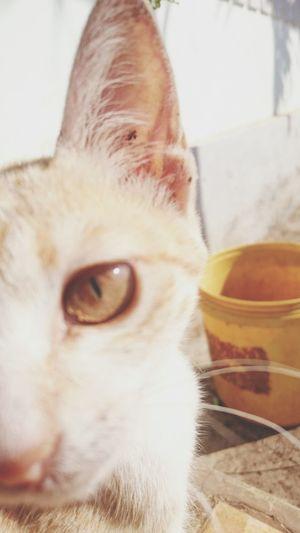 Kitty First Eyeem Photo