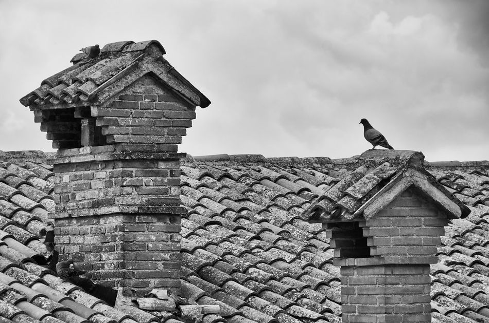 Old rooftops in Gubbio, Umbria Gubbio Italy Umbria Chimney Smokestack Brick Tiles Roof Rooftop Pigeon Sky Monochrome Blackandwhite Black And White Lines Textured  Textures And Surfaces Clouds