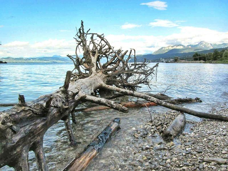 Water Lake Tree Deadtree Lakegeneva  Mountains Alpes