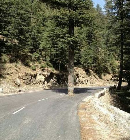 Savetrees Saveearth LoveNature Check This Out On The Road Chear Happy :) Beauty Of Pakistan Hello World Cheese!