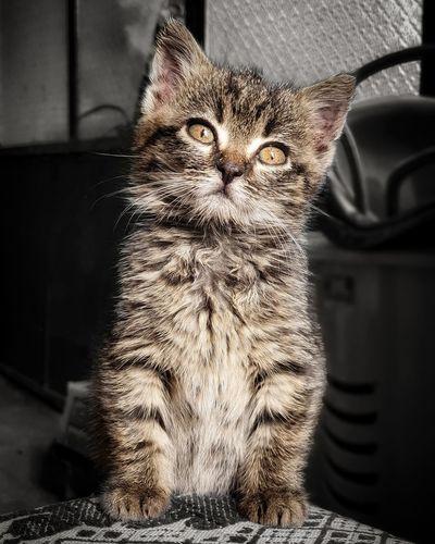 Portrait of cat sitting indoors