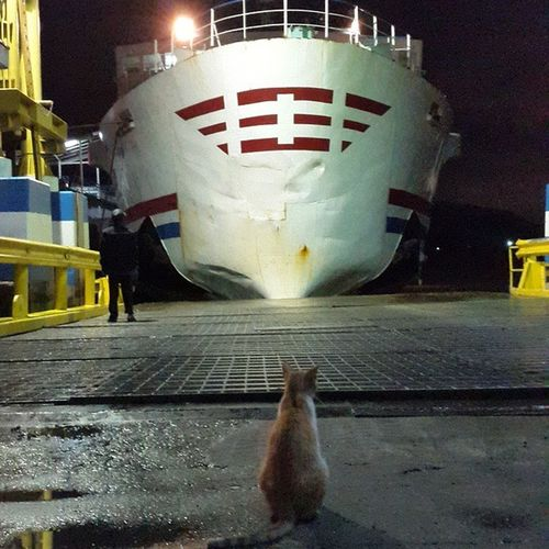 waiting for its turn yihaaa i go to lampung Cat Pose Sefo  Goes to lampung