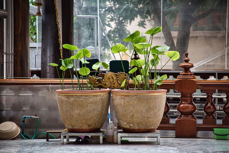 Potted plants on table against window