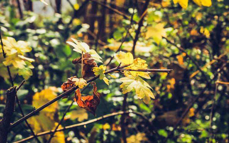 Autumn Leaves Plant Plant Part Leaf Focus On Foreground Growth Nature Close-up Day Beauty In Nature Fragility Vulnerability  No People Outdoors Sunlight Autumn Flowering Plant Flower Yellow Plant Stem Tranquility Leaves Change Dried