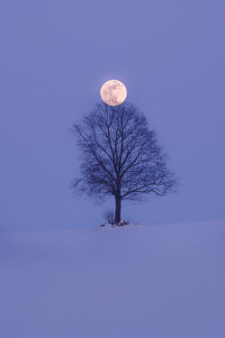 Meeting 2 Field Full Moon Moon Nature Trabant Tree Winter Astronomy Beauty In Nature Fujifilm Landscape Minimal Moody No People Snow Snow Covered Soft Colors  Togetherness Tranquil Scene