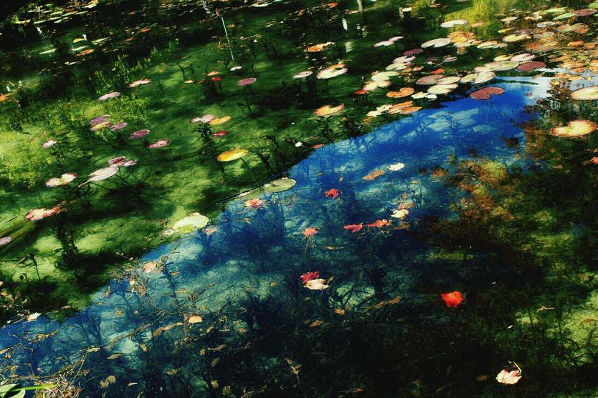 モネの池 日本の神社 日本の風景 岐阜 風景 Enjoying Life