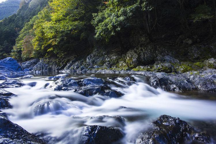 Autumn leaves of tamagawa gorge