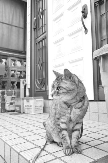 お散歩♪ EyeEm Best Shots Nikon_photography Mycat ねこ Playing With The Animals KAWAII Cute Cat ダンディ Dandy Monocrome