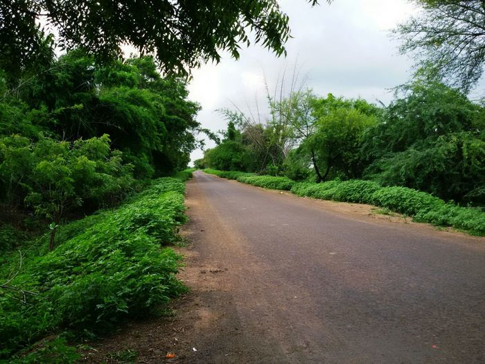 Nature Nature Photography Streetphotography Parbhani Random Colour Of Life Colour Palette Road Woods No People Outdoors Tree Leaves Clear Sky Green Color The Street Photographer - 2017 EyeEm Awards